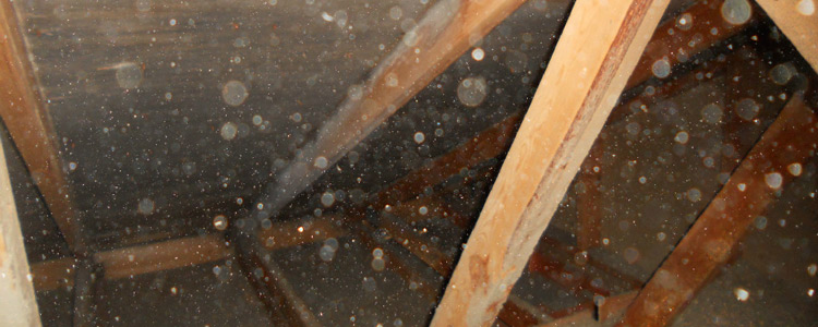 Mold Removal Services Fargo ND